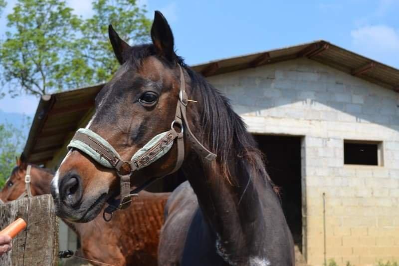 Salviamo Big, cena di beneficenza per trasferire un cavallo a Trieste