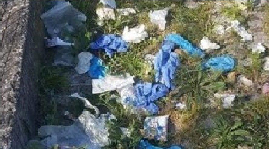 Trieste Animal Day: «Non gettate a terra guanti a mascherine, pericolo per l'ambiente»