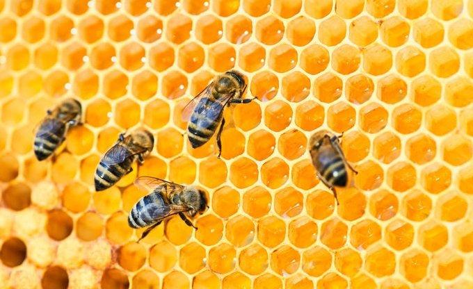 Oggi è la Giornata Mondiale delle api - www.triestecafe.it