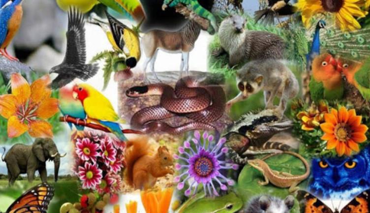 Uomo fin dalla notte dei tempi mette a rischio la biodiversità, rapporto fra umani e animali è ormai follemente insano - triestecafe.it