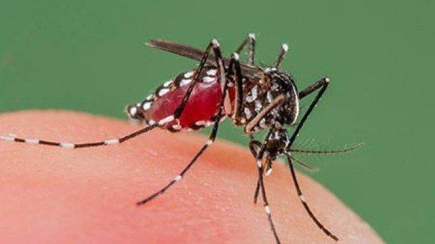 Torna da Cuba, accertato caso umano di Dengue a Latisana: al via disinfestazione