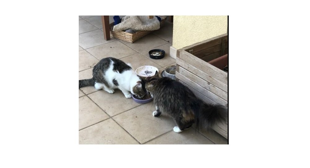 Strada del Friuli, il gatto coccolone bianco è tornato a casa! Felicità della proprietaria
