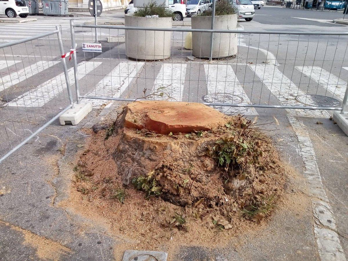 Alberi tagliati davanti la Tripcovich, Lodi: «Parte del progetto di riqualificazione, in arrivo 16 nuovi alberi»