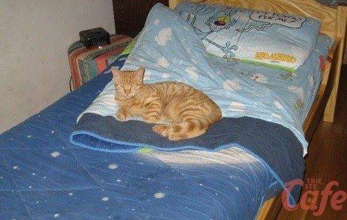 Scomparso gatto in Villa Carsia, appello disperato della proprietaria: «Sta per morire»