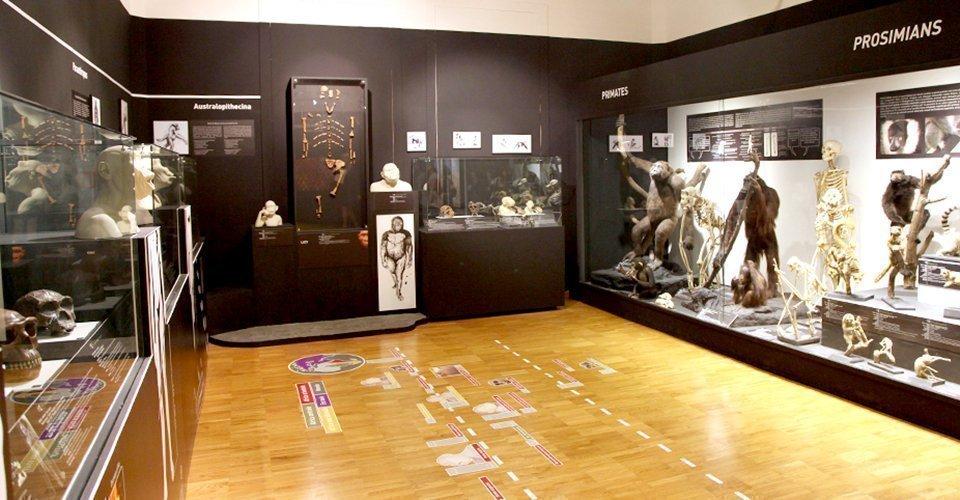 Santo Stefano al museo, gli orari dei Musei Civici nel periodo tra Natale e l'Epifania