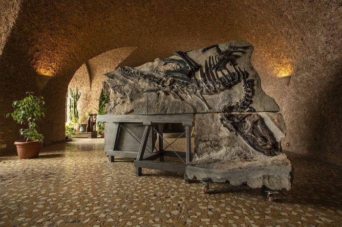 Nel week-end si potrà visitare Bruno, il grande dinosauro italiano quasi completo mai ritrovato